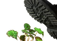 Brute military boots and plant Stock Photos