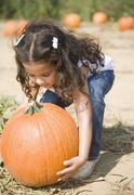 Hispanic girl picking up pumpkin Stock Photos