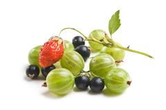 Stock Photo of gooseberries, currants and strawberries