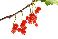 bunch of red currant - stock photo