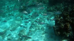 Shoal of tropical fishes Stock Footage
