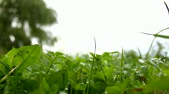 Closeup of grass with dew drops - stock footage