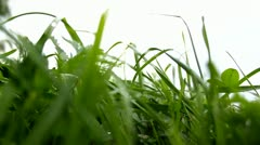 Closeup of grass - stock footage