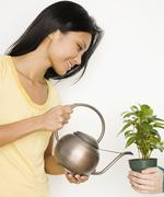 Pacific Islander woman watering potted plant Stock Photos