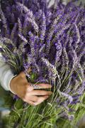 Asian woman holding bunch of lavender flowers - stock photo