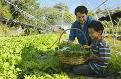 Multi-ethnic father and son harvesting organic produce - stock photo
