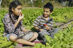 Hispanic siblings picking organic strawberries Stock Photos