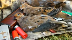 Dove Hunting Shotgun Stock Footage