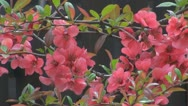 Stock Video Footage of Beautiful flowers