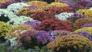 Stock Video Footage of Beautiful floral aranjamante