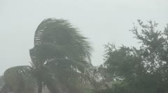 Hurricane winds over palm tree Stock Footage