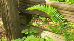 Closeup of fern by wooden fence Stock Footage