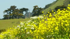 Scenic background with wild flowers blowing in wind with - stock footage