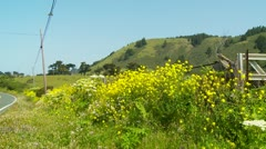 Yellow wild flowers growing by side of rural road Stock Footage