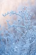 Stock Photo of beautiful frozen winter bush