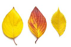 Colorful autumn leaves isolated Stock Photos