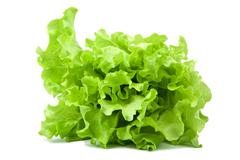 Fresh lettuce salad isolated Stock Photos