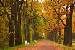 Stock Photo of colorful autumn trees in the park