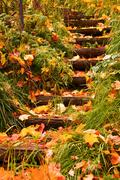 Stock Photo of steps into autumn