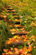 steps into autumn - stock photo