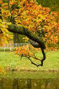 autumn tree branch - stock photo
