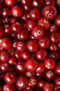 Red cranberries background Stock Photos