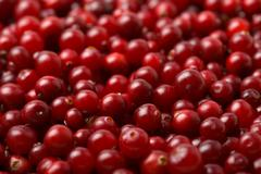 red cranberries background - stock photo