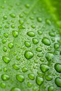 Stock Photo of fresh green leaf with water droplets