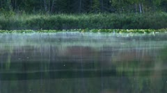 Misty Reflective Forest Lake with Bugs and Fish Stock Footage