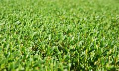 Background of the manicured green bushes Stock Photos
