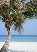 Stock Photo of palm tree on beach