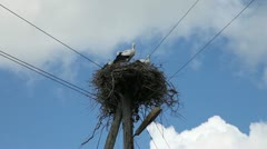 Stork family in a nest Stock Footage