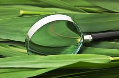 Magnifying glass on  leaves of cane Stock Photos
