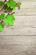 grapevine on a wooden background - stock photo