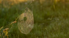 Stock Video Footage of Spider's web in the meadow, cobweb closeup