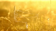 Beautiful natural meadow in the morning sunlight, sun beams Stock Footage