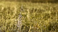 Bright morning meadow Stock Footage