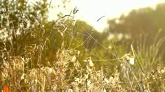 Beautiful natural meadow in the morning Stock Footage