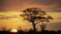 AFRICAN SUNSET Kenya, Africa Stock Footage