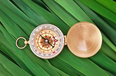 Stock Photo of compass on  leaves of cane