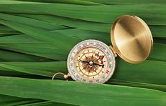 Compass on  leaves of cane Stock Photos