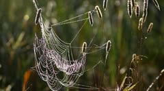 Spider's web in the meadow, close-up - stock footage