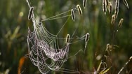 Spider's web in the meadow, close-up Stock Footage