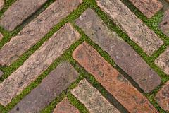 green grass between cobblestones - stock photo