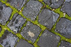 green grass between wet cobblestones - stock photo
