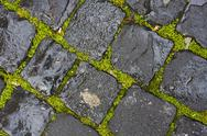 Stock Photo of green grass between wet cobblestones
