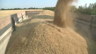 Stock Video Footage of grain of wheat 2