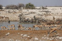 Stock Photo of wildlife at the waterhole
