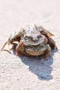 pair of frogs - stock photo