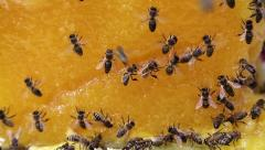 Bees on a big piece of yellow flower honey Stock Footage